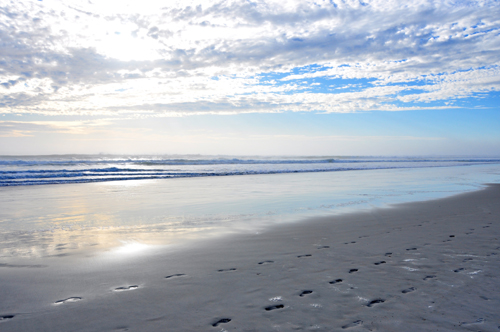 Free Picture: Photo of footprints in the sand on the beach in Daytona Beach, Florida.