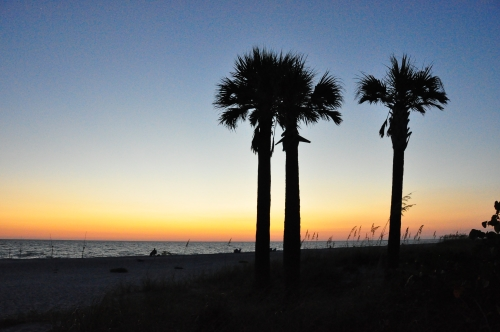 Free Picture: Photo of palm trees at sunset on the beach at Captiva Island, FL.