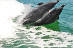 Free Photo of Interesting Facts About Dolphins