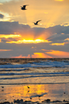 Free Photo of Beautiful Early Morning Beach Sunrise Scenery
