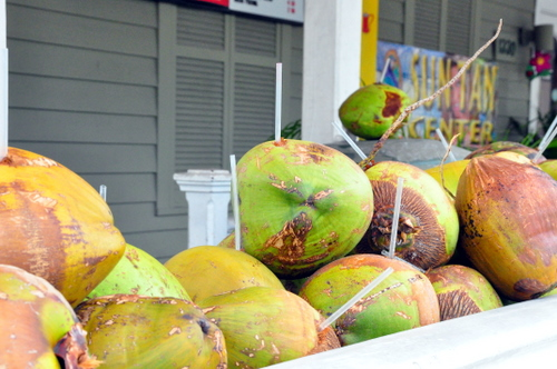 Free Picture: Photo of several fresh Key West coconuts down in Florida with a hole drilled in them for a straw to drink refreshing coconut water.