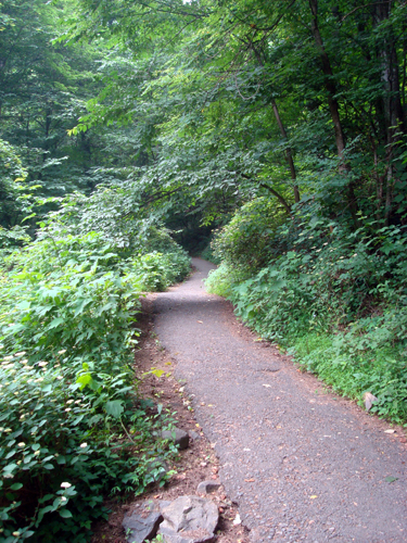 Free Picture: Photo of the trail leading to the bottom of Amicalola Falls, Georgia in the summer.