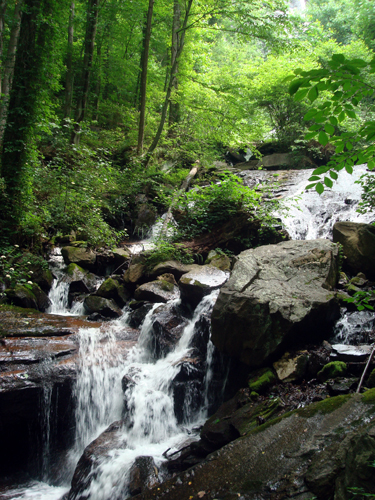 Free Picture: Photo of a forest waterfall trickling through lush, green foliage and fallen logs in the summertime at Amicalola Falls, GA.