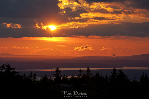 Free Picture: Photo of the sunset off of Cadillac Mountain in Acadia National Park in Maine highlights the hills in mountains in the distance with a bird soaring just above the tree line.