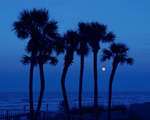 Free Photo of Daytona Beach Florida Ocean Tropical Palm Tree Moon