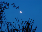 Photo of Tropical Lunar Moon Palm Leaves Florida