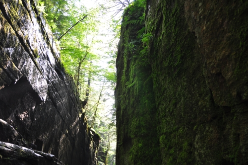 Free Picture: Photo of Flume Gorge in the afternoon looking spooky as algae and ferns grow from the sides of the shadowy walls.