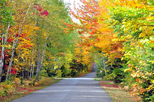 Free Picture: Photo of the fall colors down a road in Quebec, Canada displaying beautifully in vibrant red, yellow, orange, and green late in autumn.