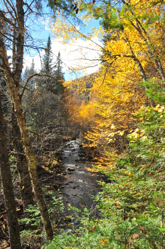 Free Picture: Photo of a trickling mountain stream in the background with colorful fall foliage at Jacques Cartier National Park in Quebec, Canada