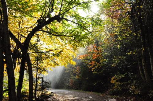 Free Picture: Photo of sun beams trying to make its way through to the shady forest path lighting up the mist coming from the waterfall at Canyon Sainte Anne in Quebec Canada.
