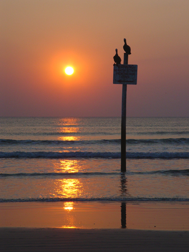 Free Picture: Photo of two pelicans sitting on a sign in the ocean during a beautiful sunrise in Daytona Beach, Florida.