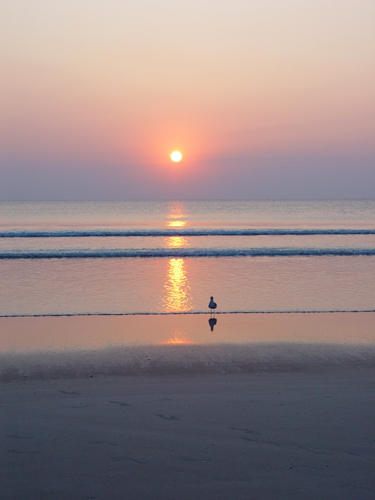 Free Picture: Photo of a single seagull standing on the shore in front of an ocean sunrise in Daytona Beach, Florida.