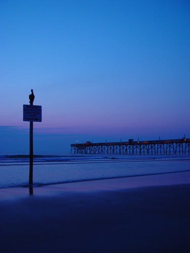 Free Picture: Photo of a pelican sitting atop a beach sign just at dawn near a pier.