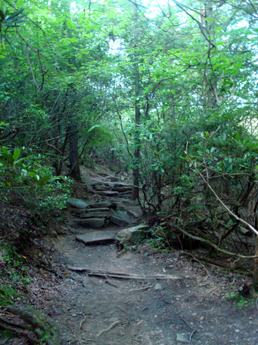 Free Picture: Photo of part of the Woodland Trail at Fall Creek Falls State Park, TN.